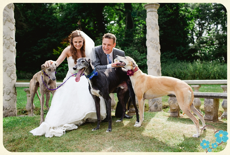 greyhound rescue west of england